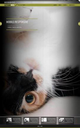 Gotham Cats Website Template