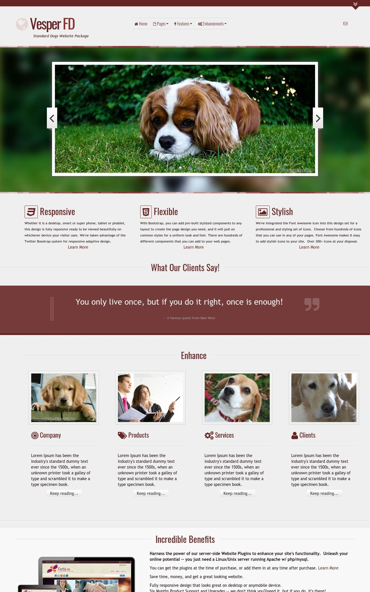 Tablet: Dogs Wordpress Theme